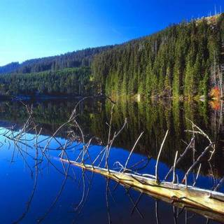 Medium prasilske jezero