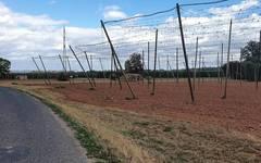 Hops fields close to Stekník