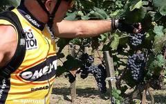 Wine harvest :)